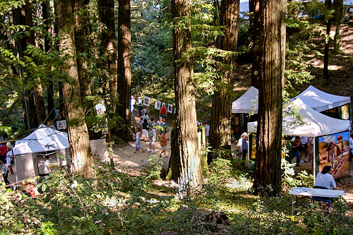 Tents-in-the-Redwoods-9-04678373154