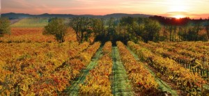 san-francisco-wine-in-the-fall