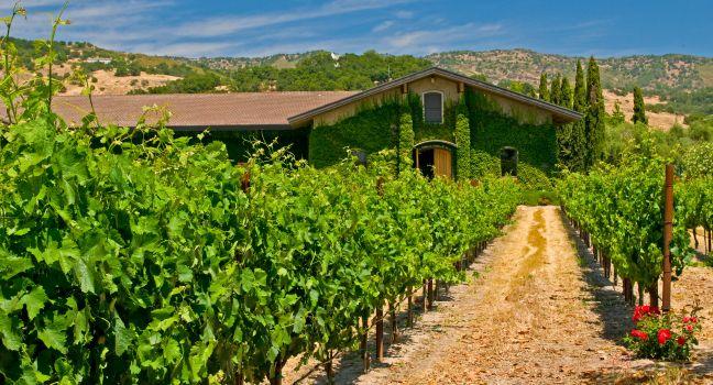 vineyard-napa-valley-napa-and-sonoma-napa-california-usa_main.jpg