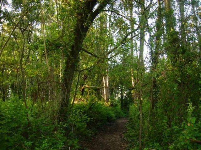 forest-path-2.jpg