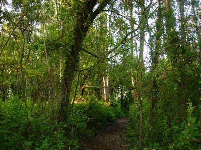 forest-path-2.jpg