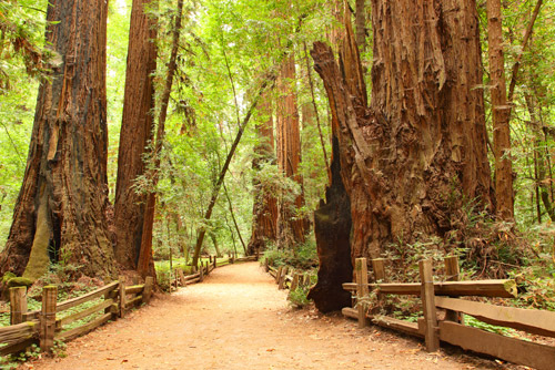 muir-woods-san-francisco.jpg